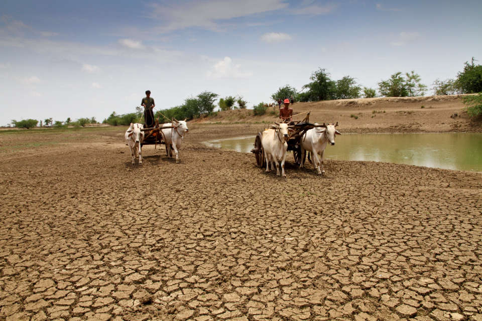 Farmers with their cows in Myanmar during a very dry season.