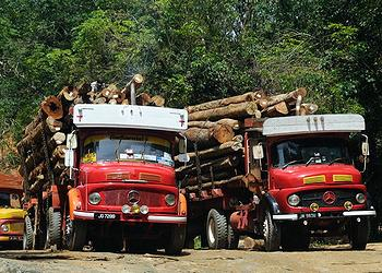 Logs illegally harvested in Malaysia are loaded on trucks headed for market (Photo by Claude Barutel)